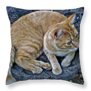 Cat In The Bath Throw Pillow by Gwyn Newcombe