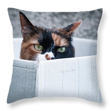 Throw Pillow featuring the photograph Cat In The Box by Laura Melis