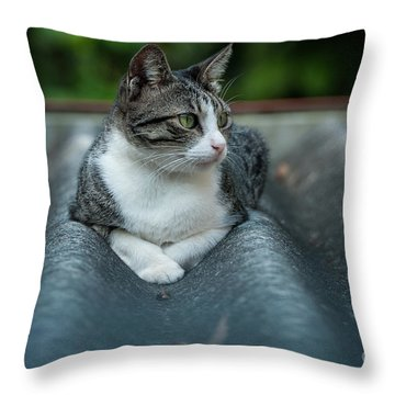 Cat In The Cradle Throw Pillow