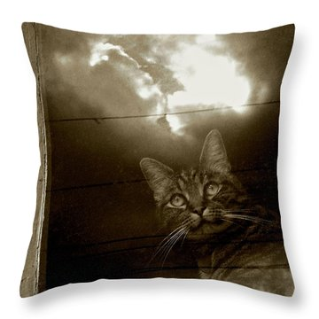 Throw Pillow featuring the photograph Cat In The Window by Patricia Strand