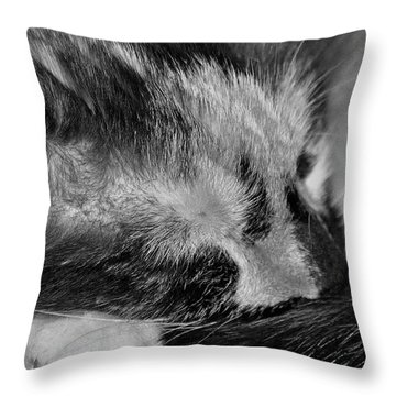 Throw Pillow featuring the photograph Cat Nap by Juls Adams