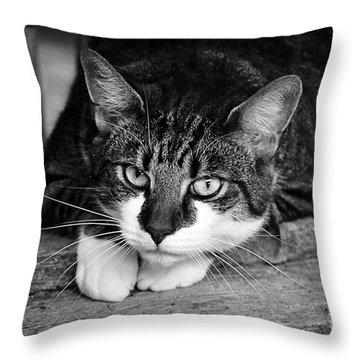 Cat Naps 2 Throw Pillow