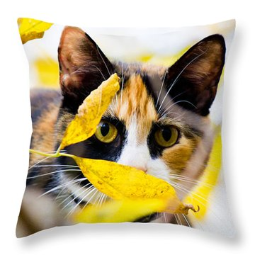 Cat On The Prowl Throw Pillow by Jonny D