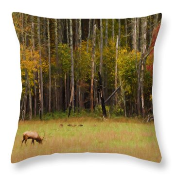 Cataloochee Valley Elk Throw Pillow