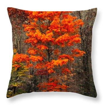 Cataloochee Color Throw Pillow