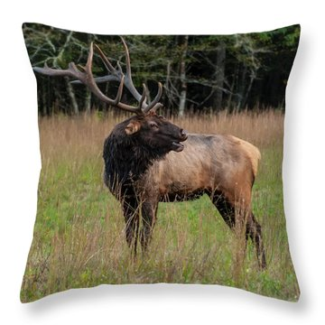 Throw Pillow featuring the digital art Cataloochee Valley Elk  by Chris Flees