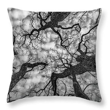 Catalpa And Altostrato Q Throw Pillow