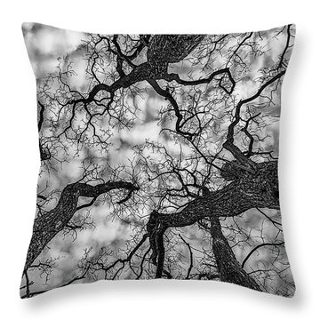 Catalpa And Altostrato Q Throw Pillow