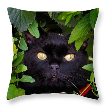 Catboo In The Wild Throw Pillow