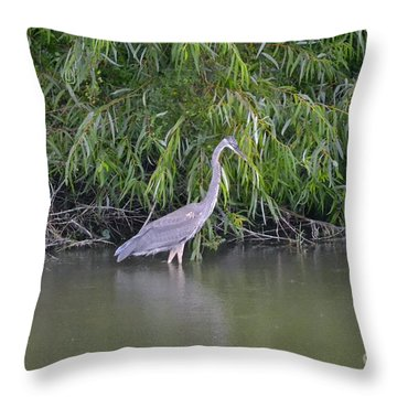 Throw Pillow featuring the photograph Catch Me If You Can by Carol  Bradley
