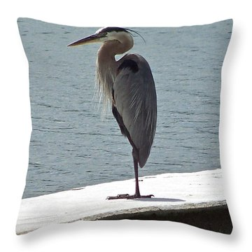 Throw Pillow featuring the photograph Catching Some Morning Rays by Carol  Bradley
