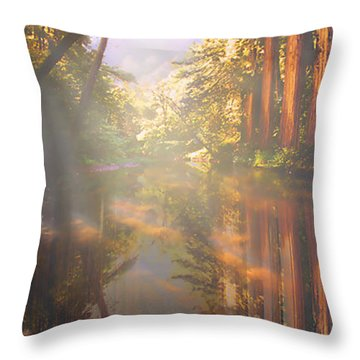 Cathedral Redwoods Throw Pillow by Robby Donaghey