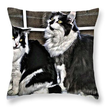 Throw Pillow featuring the photograph Cats In The Window by Beauty For God