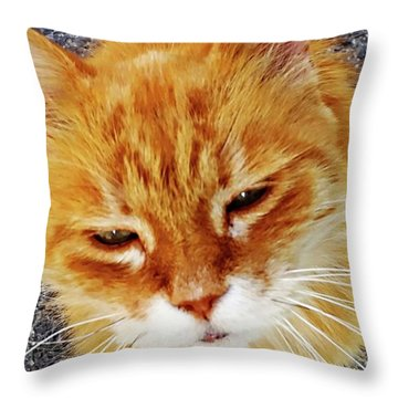 Throw Pillow featuring the digital art Cats Of Amalfi - Amalfi, Italy by Joseph Hendrix
