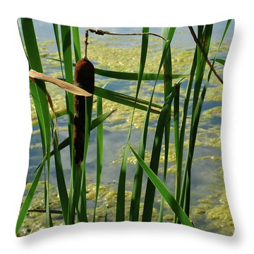 Throw Pillow featuring the photograph Cattail by Scott Kingery