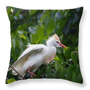 Cattle Egret At Rest Throw Pillow