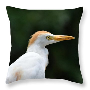 Cattle Egret Close-up Throw Pillow by Al Powell Photography USA