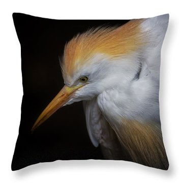 Cattle Egret Closeup Portrait Throw Pillow by David Gn