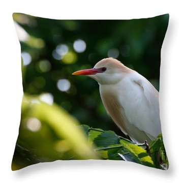 Cattle Egret In Oklahoma Throw Pillow