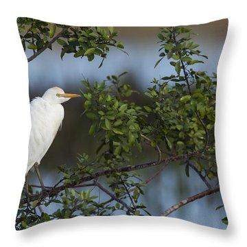 Cattle Egret In The Morning Light Throw Pillow