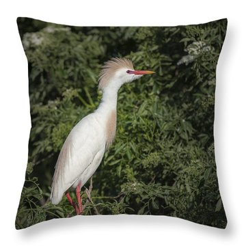 Throw Pillow featuring the photograph Cattle Egret by Tyson and Kathy Smith