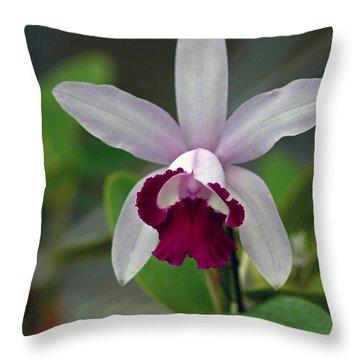 Cattleya Ordhid Throw Pillow