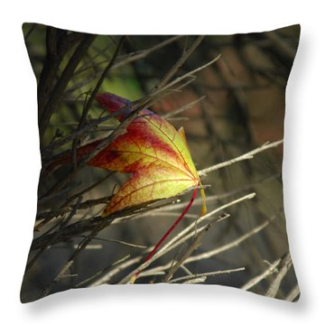 Caught In The Wind Throw Pillow by Donna Blackhall