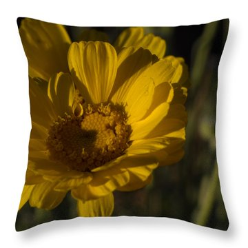 Cave Creek Beauty And Shadows Throw Pillow