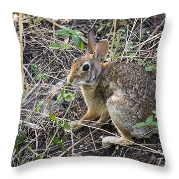 Cedar Hill Bunny Throw Pillow