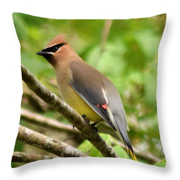 Cedar Wax Wing 1 Throw Pillow by Sheri McLeroy