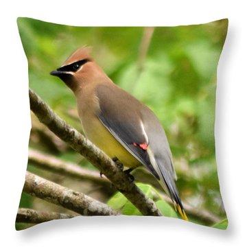 Cedar Wax Wing 1 Throw Pillow