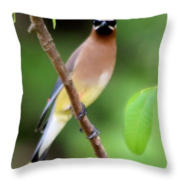 Cedar Wax Wing 2 Throw Pillow by Sheri McLeroy