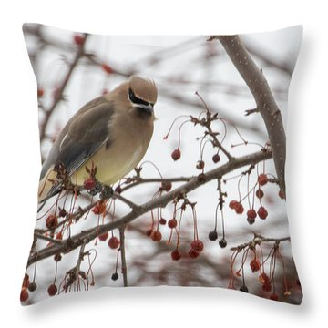 Throw Pillow featuring the photograph Cedar Wax Wing  by Betty Pauwels