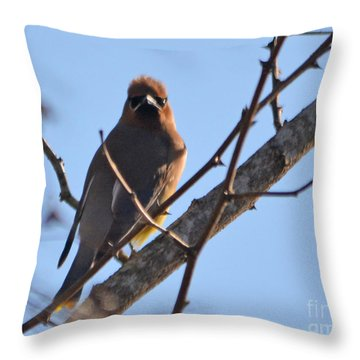 Cedar Wax Wing On The Lookout Throw Pillow by Barbara Dalton