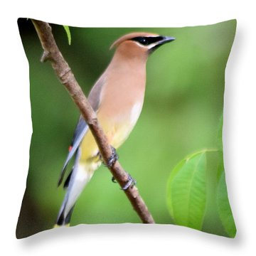 Cedar Wax Wing Profile Throw Pillow by Sheri McLeroy