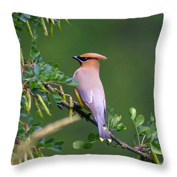 Throw Pillow featuring the photograph Cedar Waxwing 1 by Ben Upham III