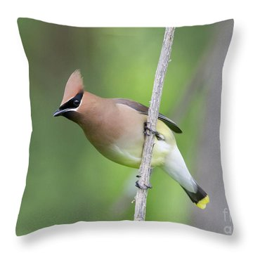 Throw Pillow featuring the photograph Cedar Waxwing 1 by Chris Scroggins