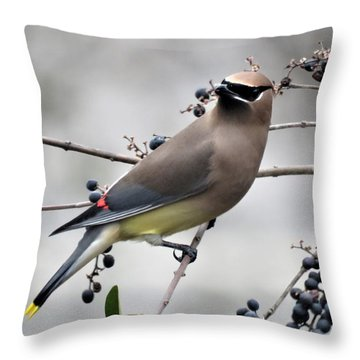 Cedar Waxwing 1 Throw Pillow