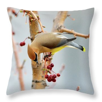 Cedar Waxwing 2 Throw Pillow