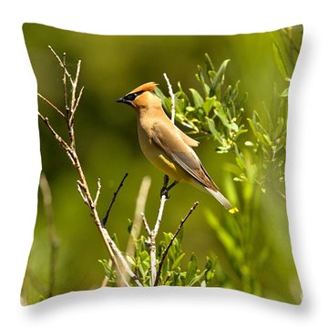 Cedar Waxwing At Glacier Throw Pillow by Adam Jewell