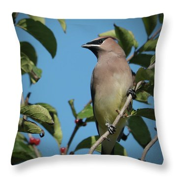 Cedar Waxwing At Rest Throw Pillow