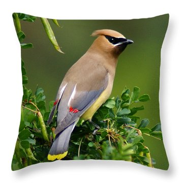 Throw Pillow featuring the photograph Cedar Waxwing by Ben Upham III