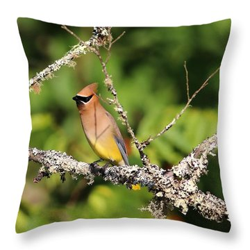 Cedar Waxwing  Throw Pillow by Carol R Montoya