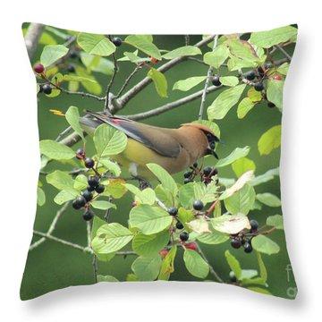 Cedar Waxwing Eating Berries Throw Pillow