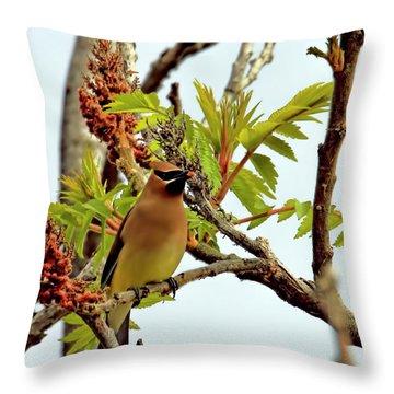 Cedar Waxwing Having A Snack  Throw Pillow