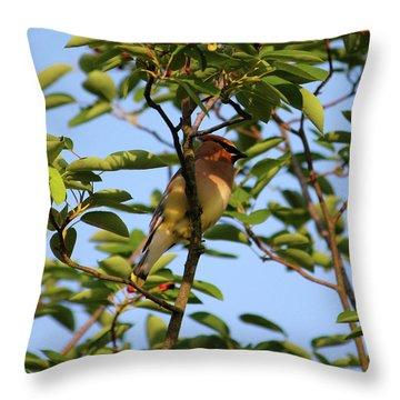 Cedar Waxwing Throw Pillow by Mark A Brown