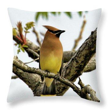 Cedar Waxwing - Spring Visitor Throw Pillow