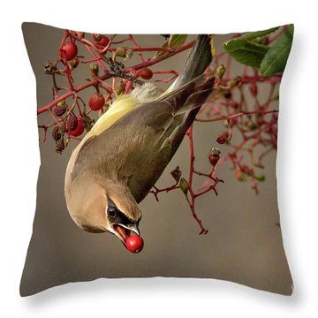 Cedar Waxwing With Toyon Berry Throw Pillow