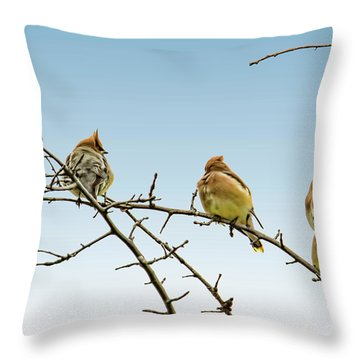Cedar Waxwings Throw Pillow by Geraldine Scull
