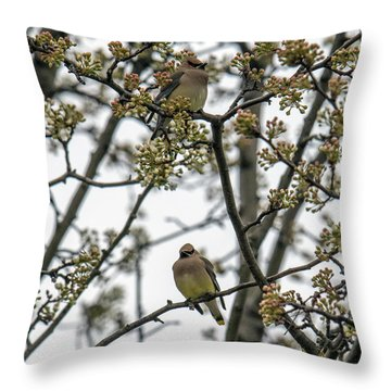 Cedar Waxwings In A Blossoming Tree Throw Pillow